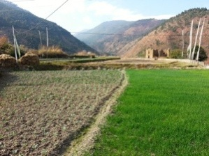 Hiking through padi field