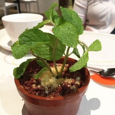 Flower Pot Milo Tiramisu