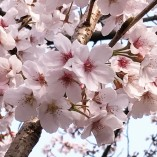 Full bloom soon!