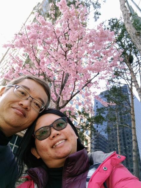 Nice pink sakura