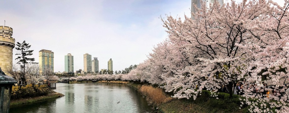 Kết quả hình ảnh cho seokchon lake cherry blossom