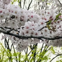 Beautiful blossom