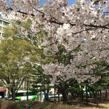 Nice blossom